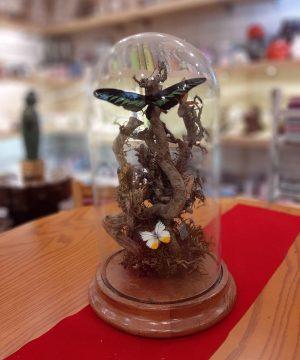 حباب پروانه تپل قطر23 ارتفاع 42