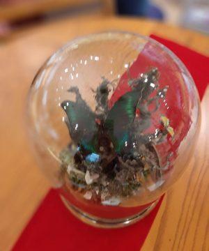 حباب پروانه تپل قطر 23 ارتفاع 31