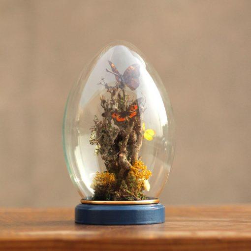 حباب پروانه تخم مرغی کوچک