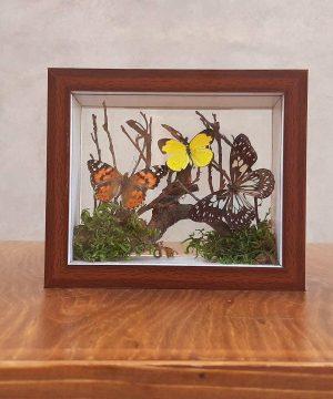 تابلو پروانه مستطیل کوچک قهوه ای 18*15