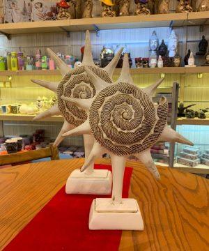 ستاره دریایی کوچک سفید