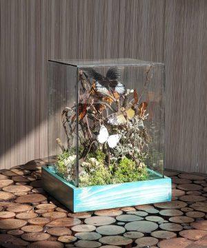 تراریوم پروانه کوچک سایز1