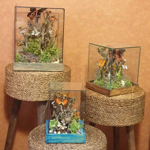 تراریوم پروانه الیاهو گالری